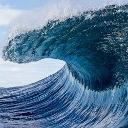 Blue Wave Economics