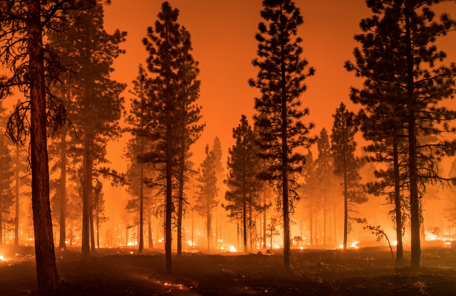 Perspectives: Fireproofing California