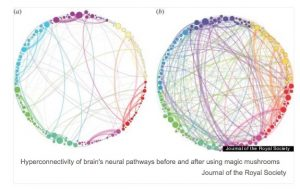 """Source: G. Petri, P. Expert, et. al., """"Homological scaffolds of brain functional networks,"""" Journal of the Royal Society, December 2014"""